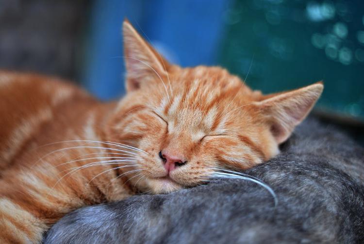 rudy kot spi